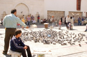 A man periodically feeds a flock of pigeons outside the XXX mosque in Damascus. People here believe it is their duty to take care of all creatures. (Photo by Clarice Connors)